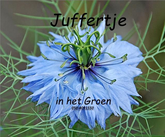 http://noorder-es.nl/wp-content/uploads/2018/07/juffertje-in-het-groen-2.png
